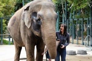 Sue And Elephant