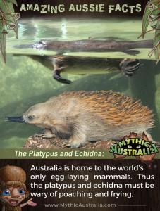 Egg-Laying-Marsupials