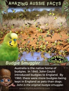 Aussie Facts Budgie Smuggler