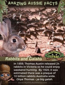 Aussie Facts Rabbits and Galahs