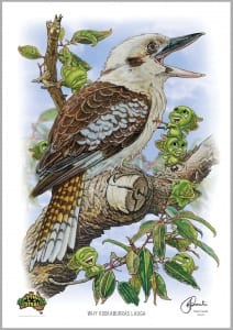 Why Kookaburras Laugh Image